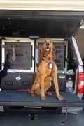 Police Dog-1